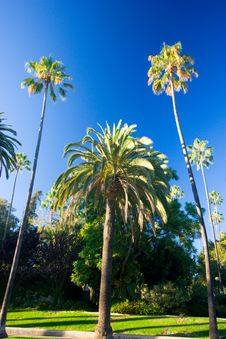 Free California Palm Trees Stock Photography - 3406552