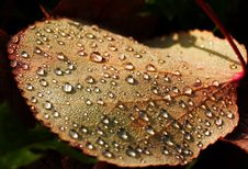 Free Leaf With Dew Drops Stock Photography - 3407442