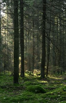 Free In The Woods Stock Image - 3407601