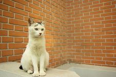 Free Persian Cat Royalty Free Stock Photos - 3408208