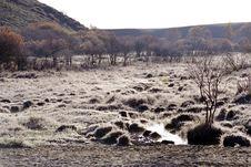 Free Wetland Royalty Free Stock Photo - 3408835