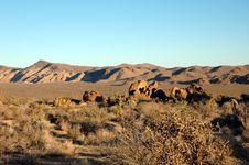 Free Mojave Landscape Stock Photos - 3409023