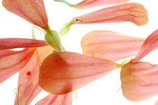 Free Petals Stock Image - 3409571