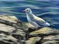 Free Seagull Royalty Free Stock Photos - 34007928