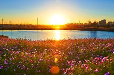 Free The Sun Rises Perennial Coreopsis Stock Photography - 34000672