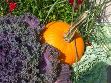 Free Kale And Pumpkin Stock Photo - 34001430