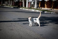 Free Stray Cat Posing Royalty Free Stock Images - 34011809