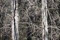 Free Leafless Trees Royalty Free Stock Image - 34017336