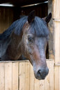 Free Horses In Stable Royalty Free Stock Images - 34017439