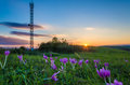 Free Violets In Sunset Light With Antenna On The Background Royalty Free Stock Photo - 34018455