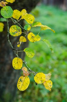 Free Autumn Leaves Royalty Free Stock Images - 34027479