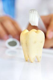 Free Dentist Holding Brushing Teeth Royalty Free Stock Photography - 34028857