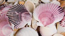 Free Sea Shells Royalty Free Stock Photos - 34068168