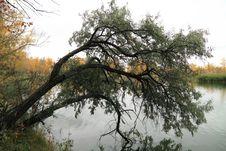 Free Autumn Tree Stock Photography - 34069992