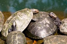 Free Turtle Family Stock Images - 34074464
