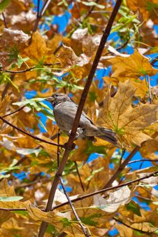 The Sparrow Sitting On A Branch Royalty Free Stock Photos