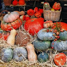 Free Pumpkins On Market Royalty Free Stock Photos - 34077998
