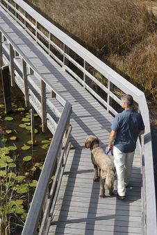 Man And Dog On Boardwalk In Wetland Royalty Free Stock Photos