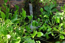 Free An Indoor Garden Stock Photo - 34084840