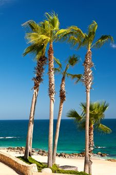 Free Palm Trees Royalty Free Stock Photography - 34089587