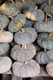 Free Pumpkins Stock Photos - 34093173