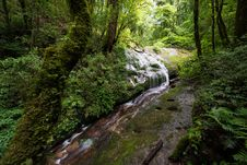 Free Waterfall In The Forest Royalty Free Stock Photo - 34094725