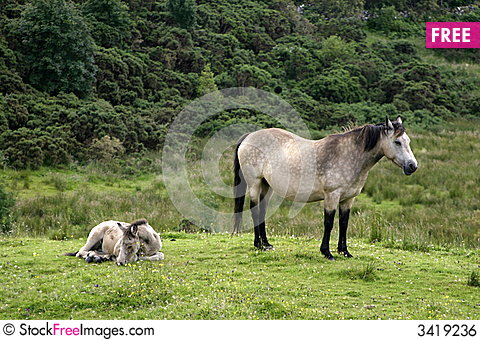 Free Horse And Colt Royalty Free Stock Image - 3419236