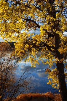 Free Fall Tree Royalty Free Stock Photos - 3410428