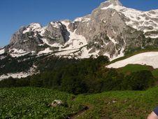 Free Mountain Fisht Royalty Free Stock Photography - 3410497