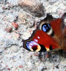 Free Butterfly Royalty Free Stock Images - 3410709