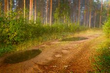 Path In Pine Wood Stock Photography