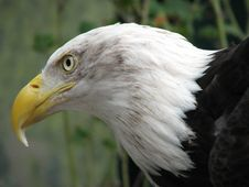 Free Eagle Wonder Royalty Free Stock Photography - 3410837