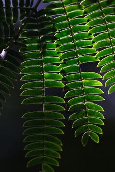 Green Leaf Stock Images