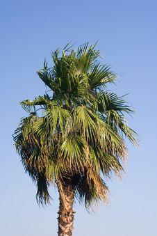 Free Palm Tree Stock Photography - 3414092