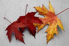 Free Autumn Feeling Royalty Free Stock Photo - 3415325