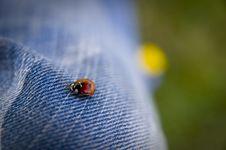 Free Ladybug Stock Images - 3415724