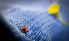 Free Ladybug Royalty Free Stock Photo - 3415745