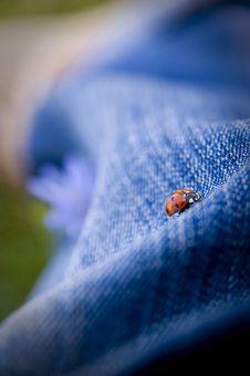 Free Ladybug Stock Photo - 3415760