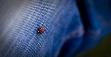 Free Ladybug Stock Photo - 3415770