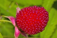 Free Red Berry On Green Leaves Stock Image - 3415781