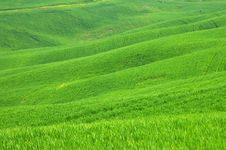 Free Landscape,Tuscany Val D Orcia Royalty Free Stock Photos - 3415798