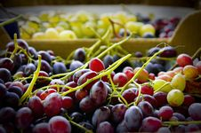 Free Grapes Stock Photos - 3415843