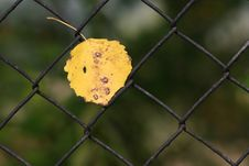 Free Hanging Leaf Stock Images - 3415944