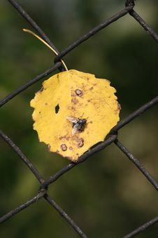 Free Fly On The Leaf Royalty Free Stock Photos - 3415948