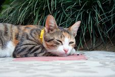 Free Cat Royalty Free Stock Photo - 3415955