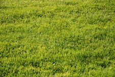Free Golf Gren - Grass Stock Photos - 3416393