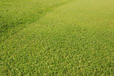 Free Golf Gren - Grass Royalty Free Stock Photos - 3416468