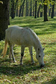 Free Horse Stock Photography - 3418472