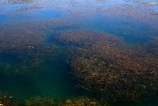 Free Grassy Pond Stock Image - 3418681
