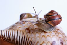 Free Snails Royalty Free Stock Images - 3419439